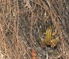 Der Kletternte frosch
