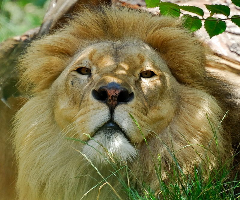 Der König bin ich