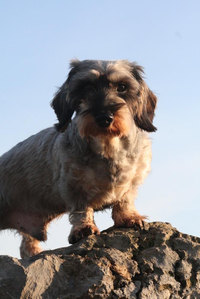 Der König der Hunde