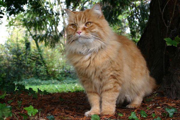 Der König der Katzen