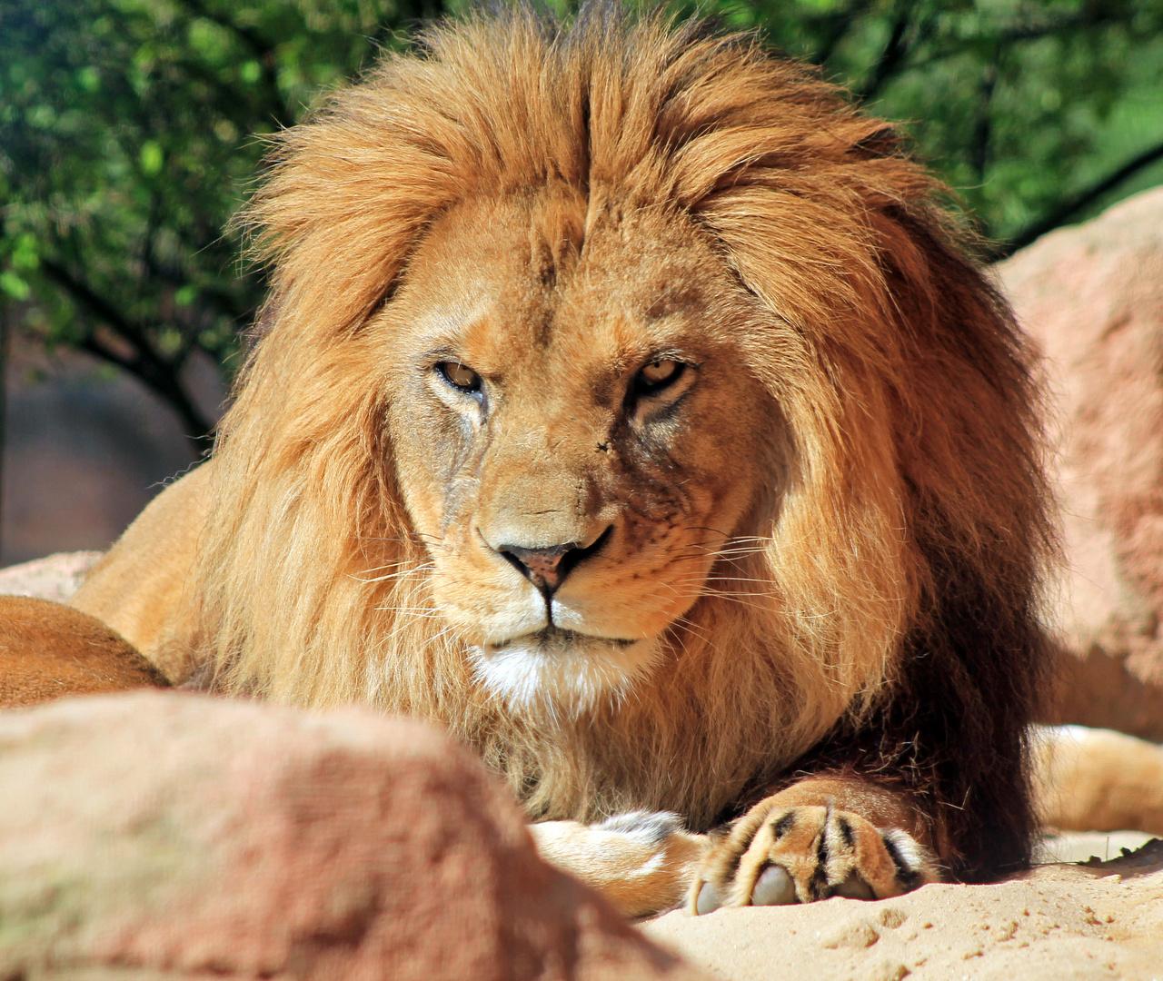 Der König des Zoos