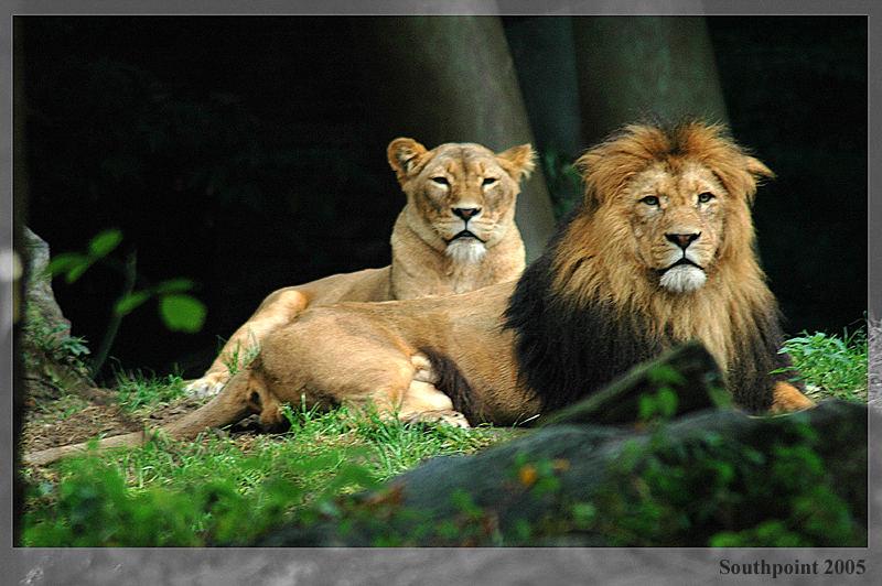 Der König mit ....