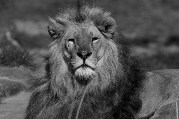 Der König selbst