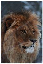 Der König unter den Tieren