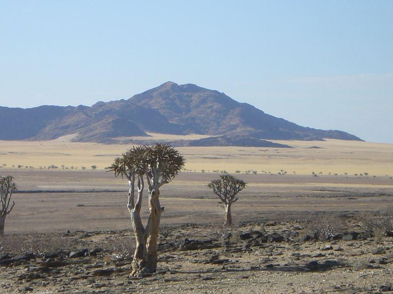 Der Kokerboom (Quiver tree)