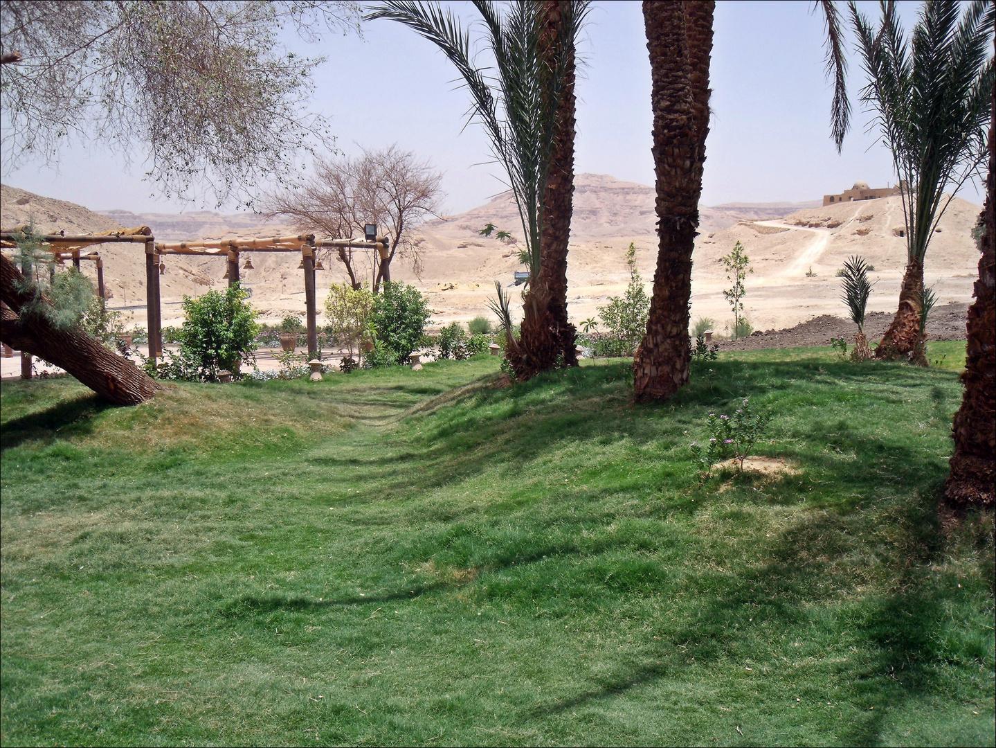 Der Kontrast der Wüste