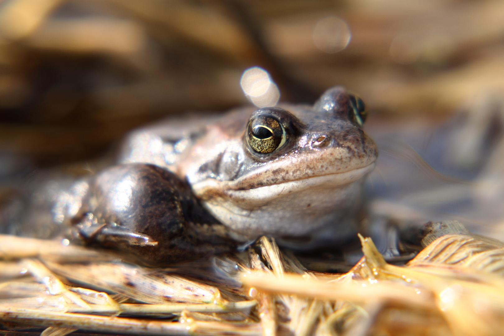 Der kooperative Frosch