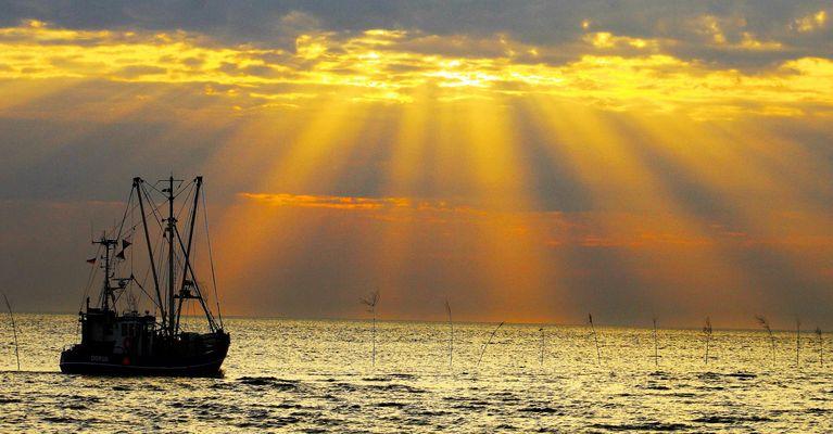 Der Krabbenfischer verlässt den Hafen