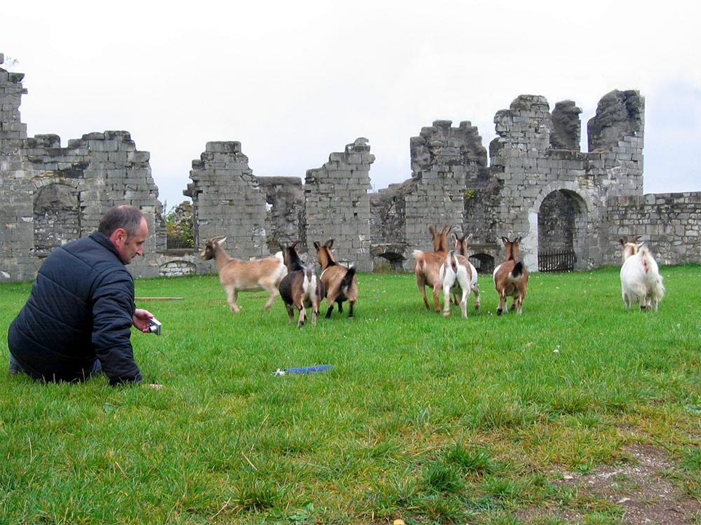 Der kranke Oberfranke und die Ziegen des Festungsgurus...