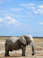 Der Kreideelefant.
