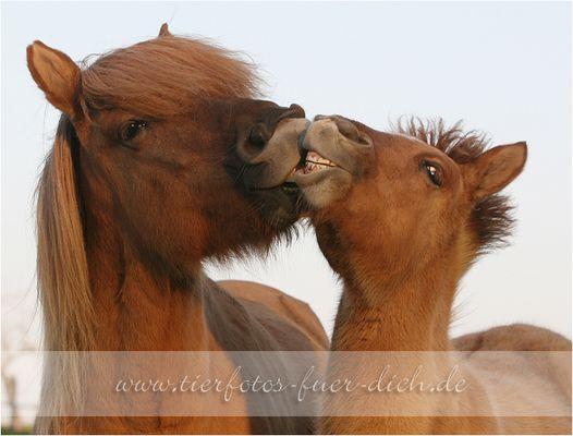 ~ der Kuss ~