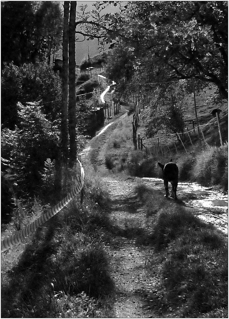 Der lange Weg nach Hause.
