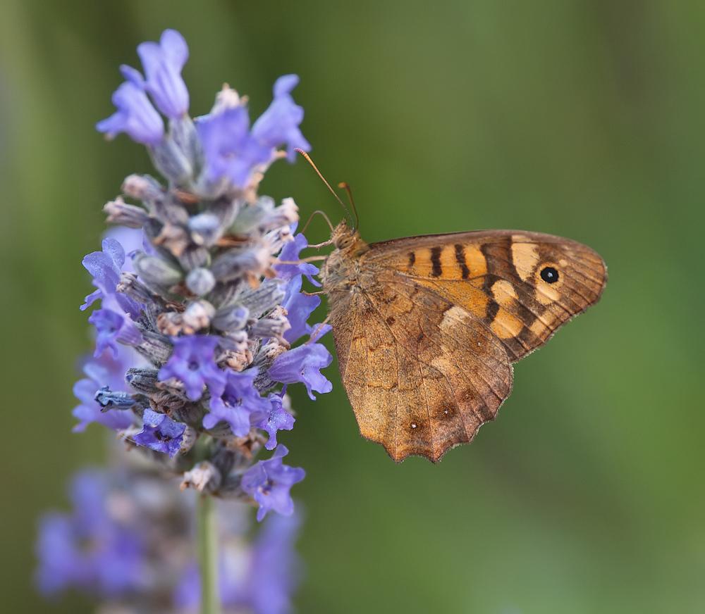 der Lavendel macht's möglich