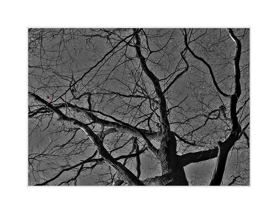 Der Lebensbaum trägt sein letztes Blatt gen Himmel