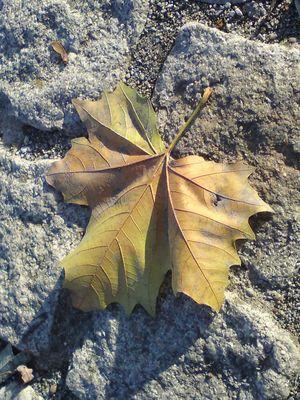der letzte Blatt vom Baum