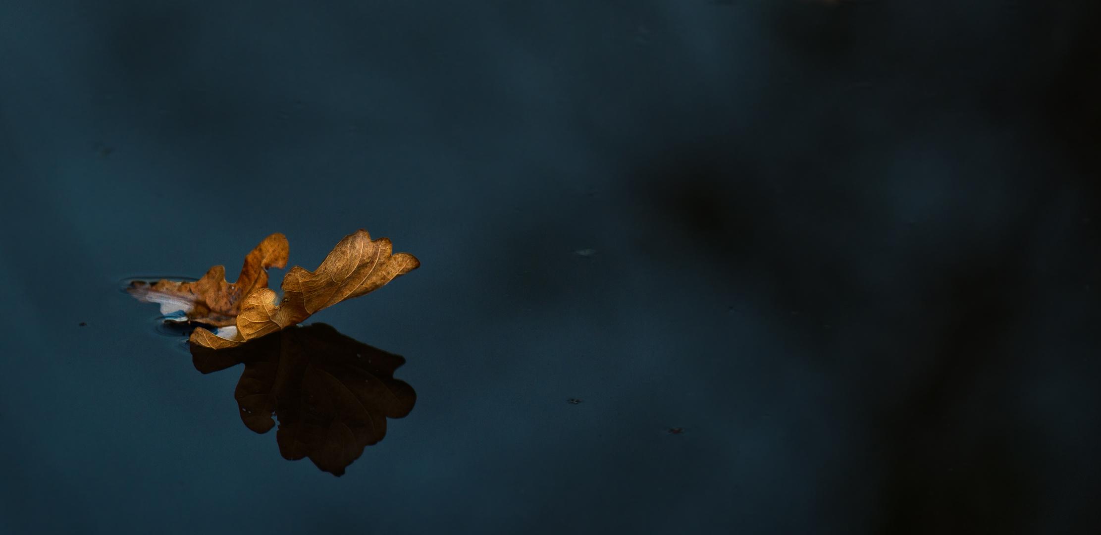 Der letzte Farbtupfer auf dem Wasser...