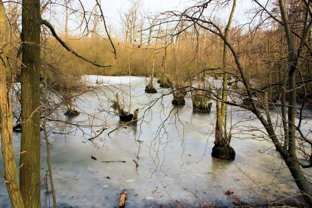 Der letzte Frost in Riddagshausen?