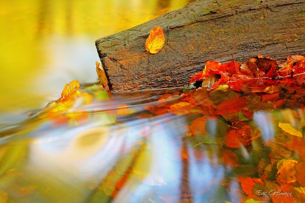 Der letzte Herbsttag