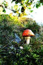 Der letzte Pilz