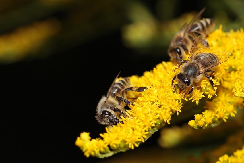 Der letzte Pollen ..., Dettingen a.d.Erms, Biosphärengebiet schw. Alb