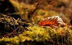 Der letzte Sonnenstrahl, so schön kann der Herbst sein.