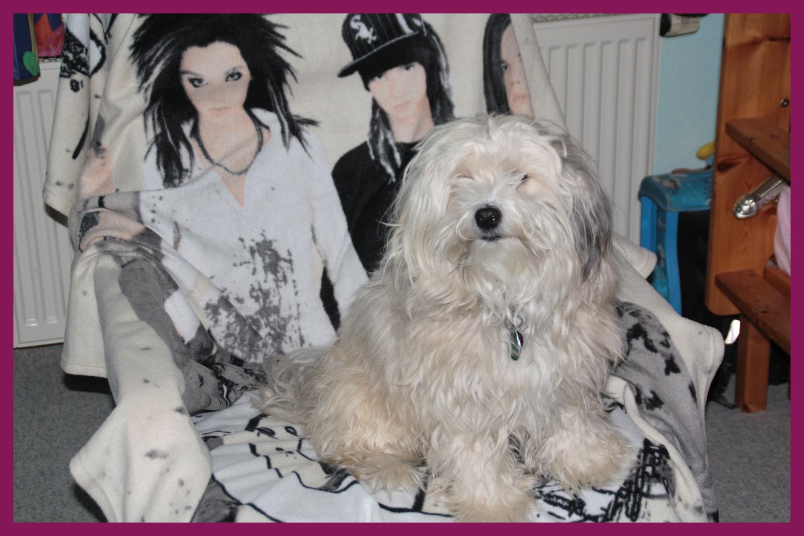Der letzte Tokio Hotel Fan