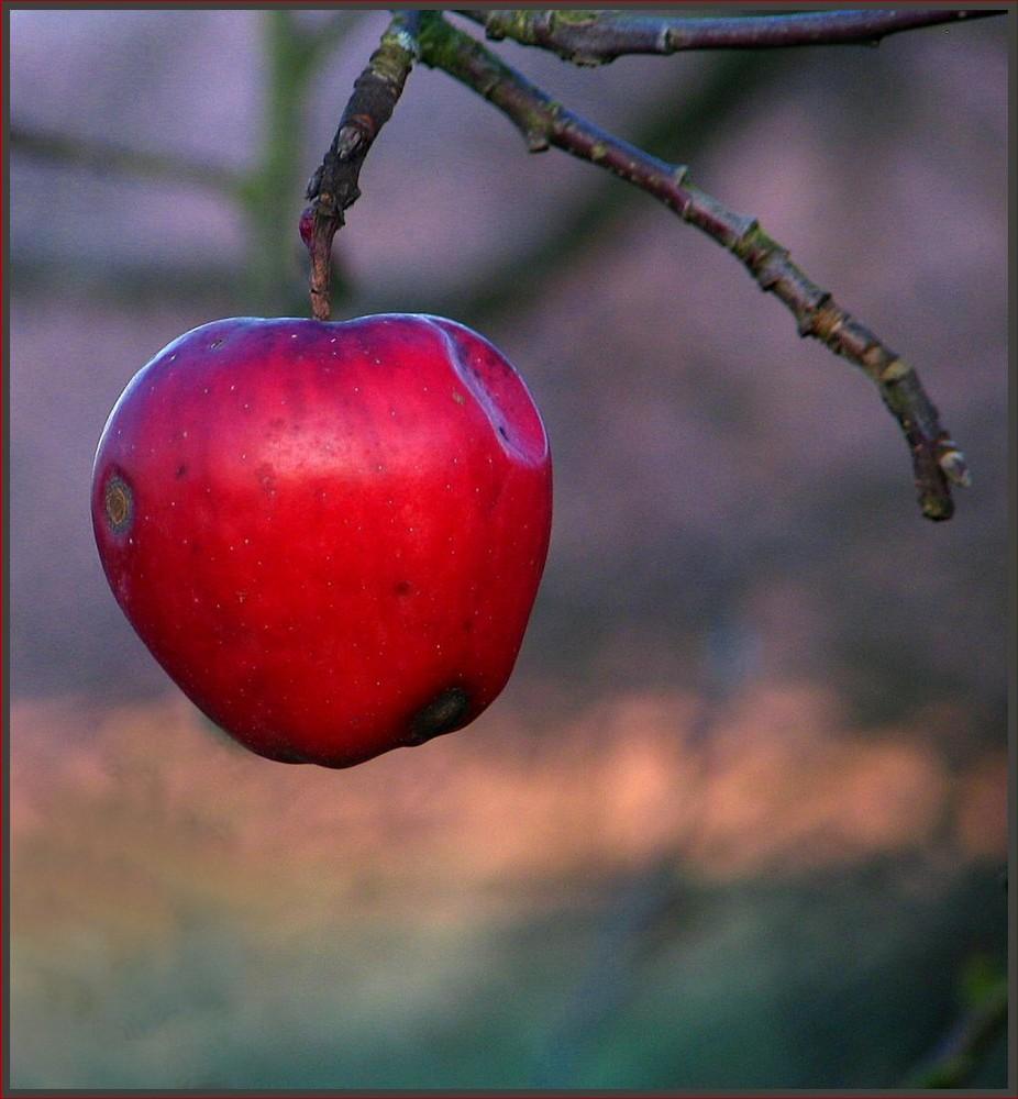 Der letzte und einzige Apfel
