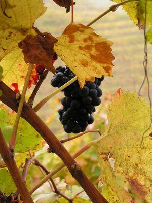der letzte Wein des Jahres 2007