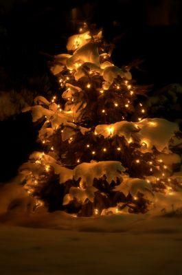 Der letzte Winterweihnachtsgruß