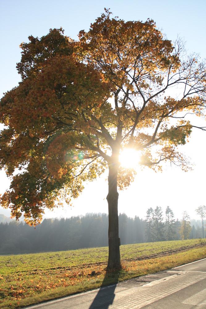 Der leuchtende Baum