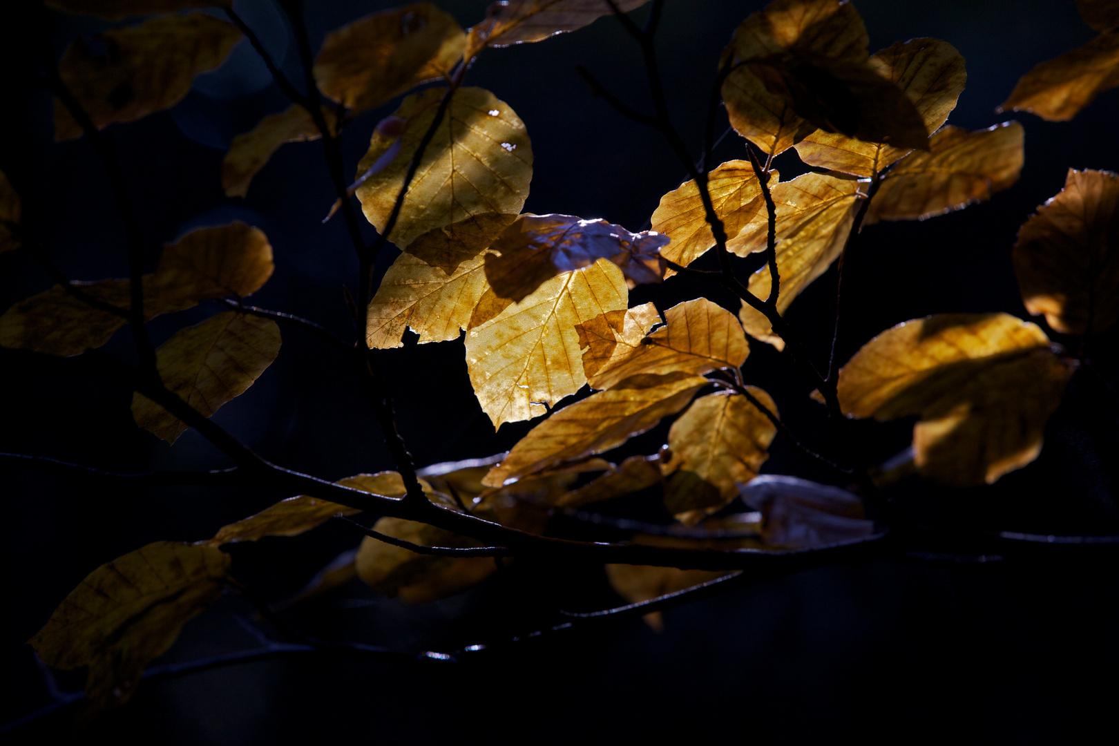 Der Lichtstrahl und die Blätter