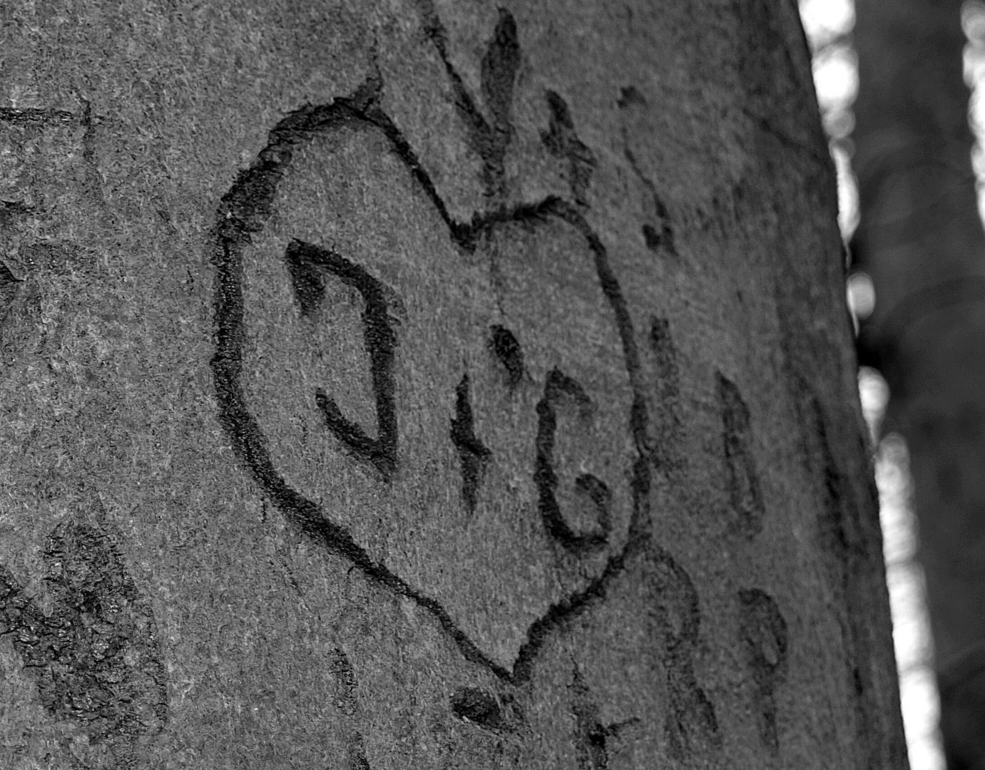 Der Liebesbaum