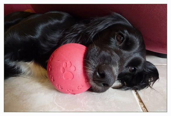 Der Lieblingsball