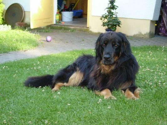 Der liebste Hund der Welt...