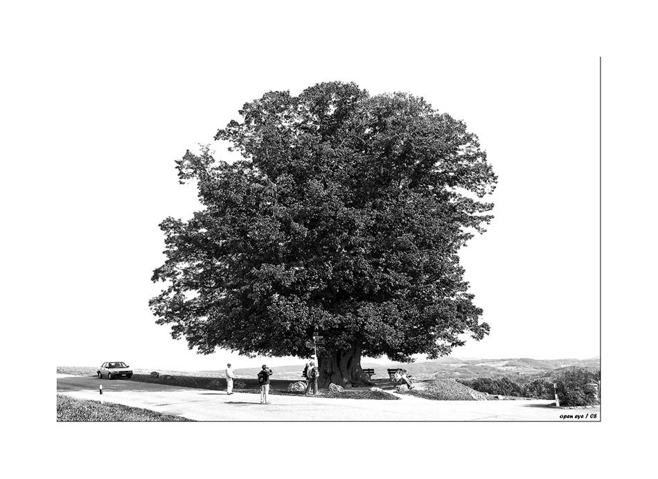 Der Lindenbaum auf dem Bözberg / Schweiz