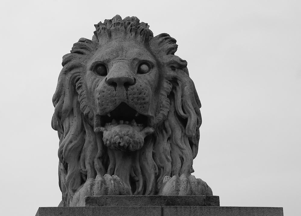..der Löwe..