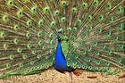 ..Der Männlichkeitswahn in der Tierwelt..:))