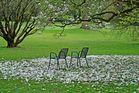 Der Magnolie edler Blüten-Teppich
