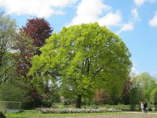 Der Mai ist gekommen, die Bäume schlagen aus.......