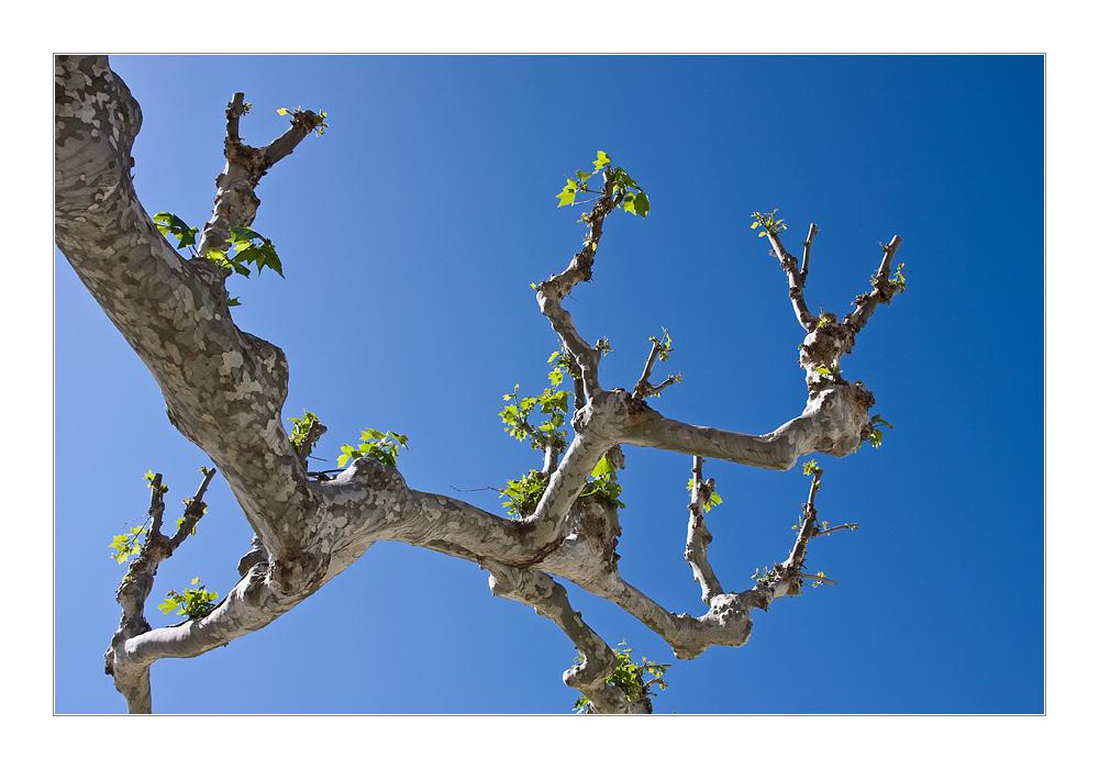 Der Mai ist gekommen. Die Bäume schlagen aus.