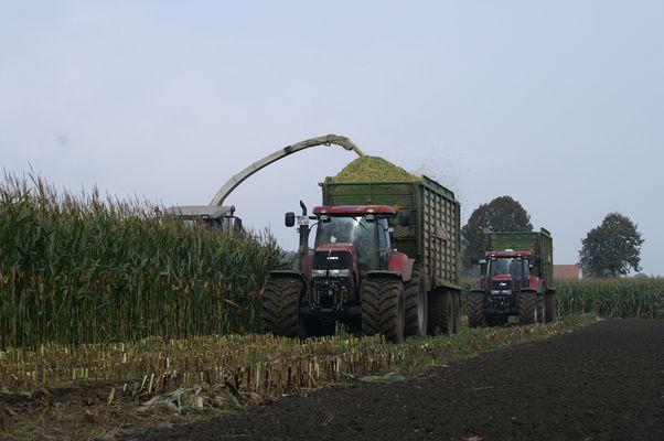 Der Mais muss ab!