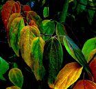 Der Malermeister Herbst