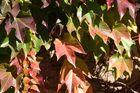 der Malermeister malt die Blätter sehr unterschiedlich an