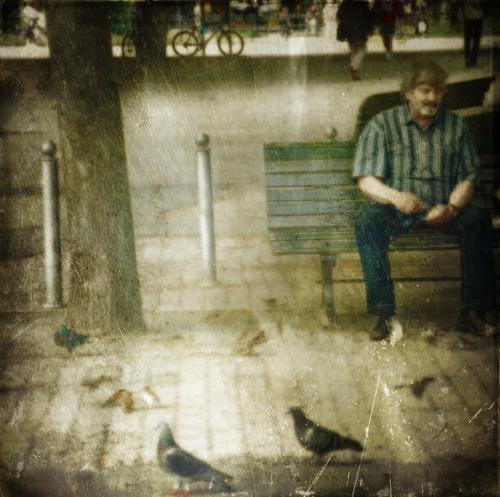 Der Mann, der die Vögel fütterte.........