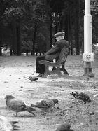 der mann und die vögel
