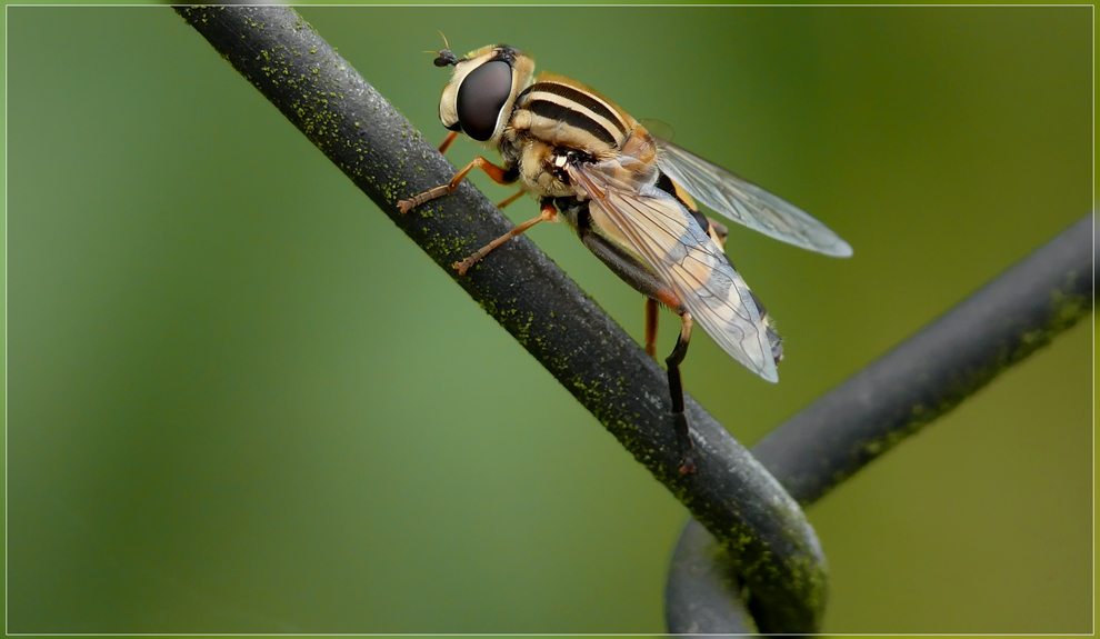 der Maschendrahtzaun ist ein sehr gutes Insekten Biotop