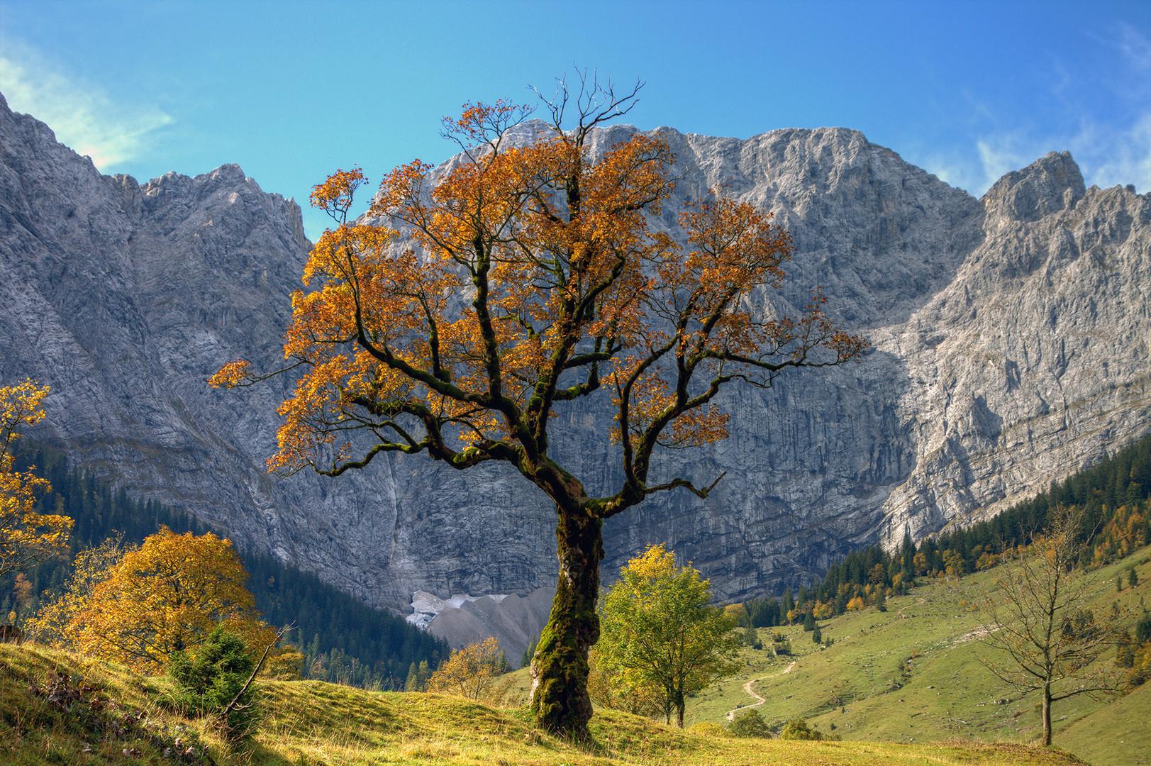 der meistfotografierte Baum