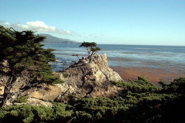 Der Meistfotografierteste Baum der Welt