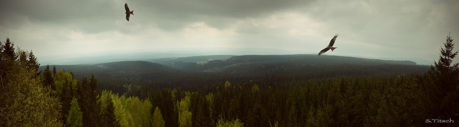 Der Milan im Harz