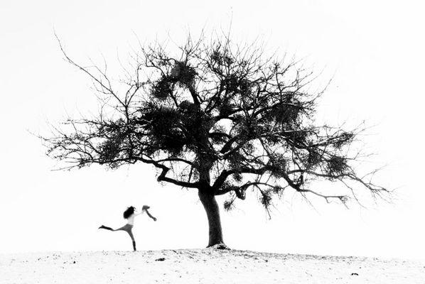 Der Mistelbaum